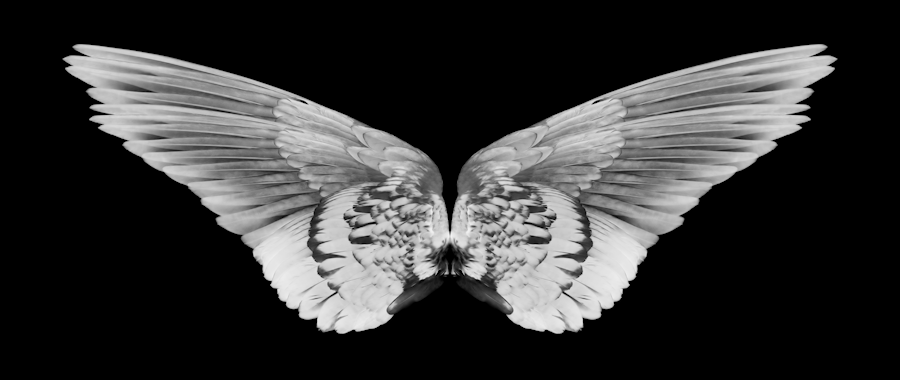 wings_front